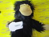 Chimpanzee DR
